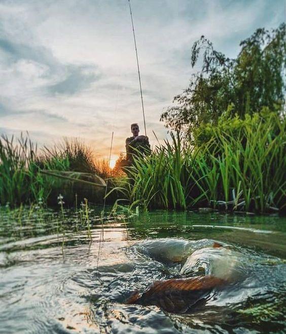Horgászverseny